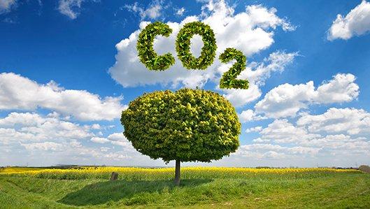 Landschaftsmotiv mit Baum und dem Kürzel CO2
