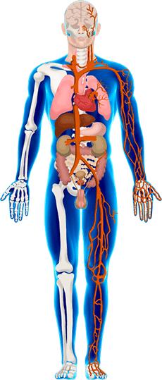 Körperkompass